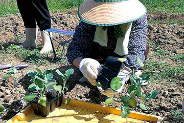 作業療法農作業リハビリ風景